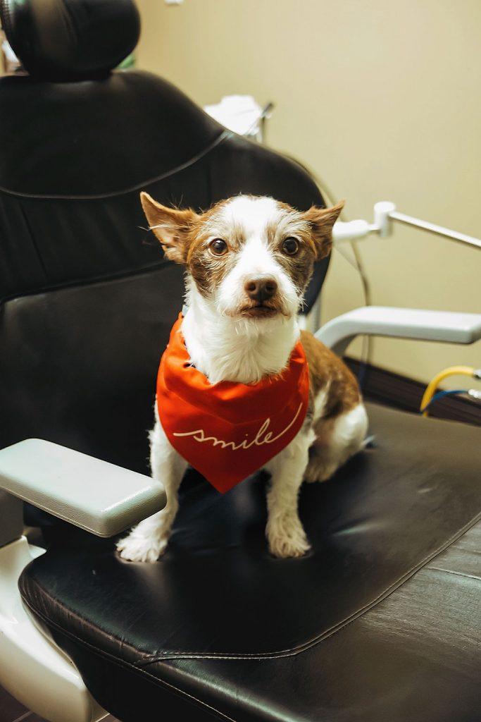 Dog sitting on dental chair